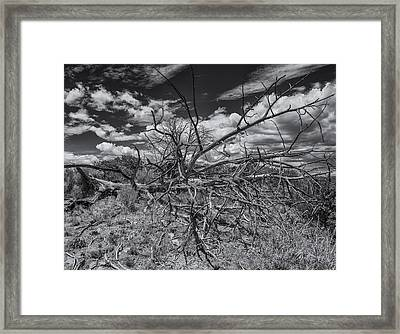 Dead Wood Framed Print by Thomas Schreiter