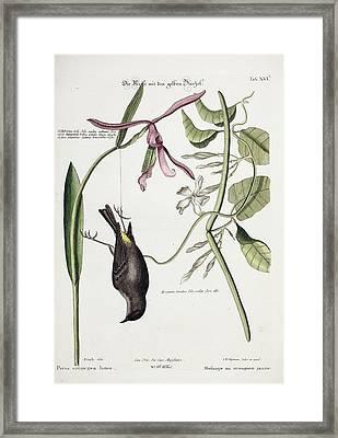 Dead Yellow-rump Songbird Framed Print