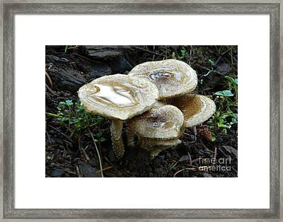 Framed Print featuring the photograph Deadly Beauty 1 by Chalet Roome-Rigdon