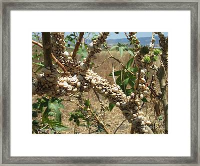 Deadly Beauty Framed Print