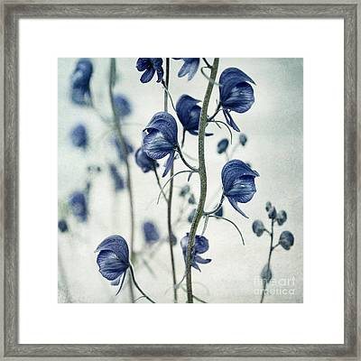 Deadly Beauty Framed Print by Priska Wettstein