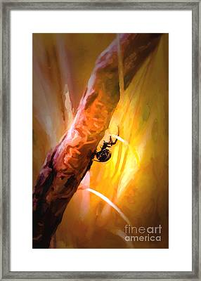 Deadly Framed Print by Jon Burch Photography