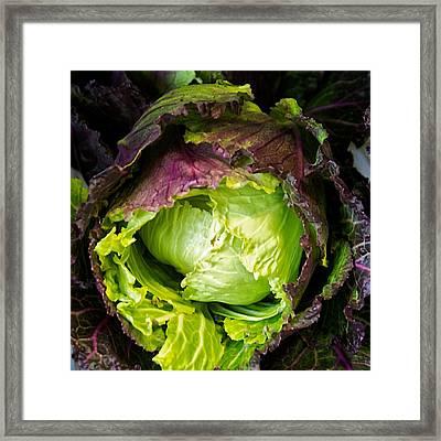Deadon Cabbage Framed Print by Tom Giske