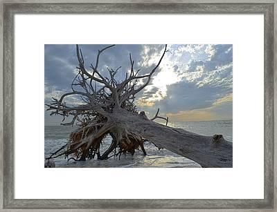 Deadwood Framed Print by Bob Jackson