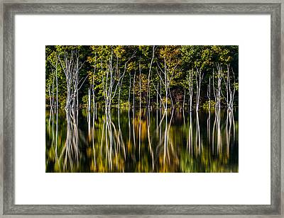 Deadwood Framed Print by Mihai Andritoiu