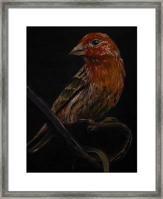 Deans Bird Framed Print by Sherry Robinson