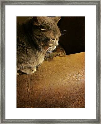 Dear Lucy Framed Print by Guy Ricketts
