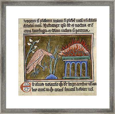 Death And Rebirth Of The Phoenix Framed Print