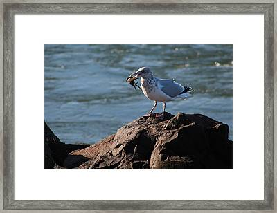Death By Seagull Framed Print