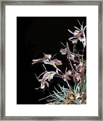 Death Of An Orchid  Framed Print