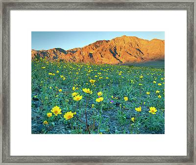Death Valley National Park, California Framed Print by Scott T. Smith