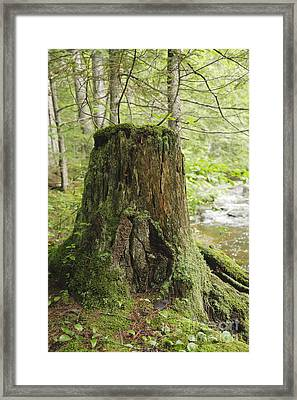Decaying Tree Stump - White Mountains New Hampshire  Framed Print by Erin Paul Donovan