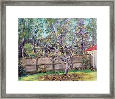December Apples Framed Print by Asha Carolyn Young