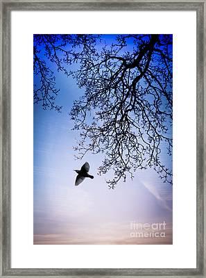 December Chill Framed Print by Jan Bickerton