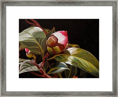 December Rose Framed Print