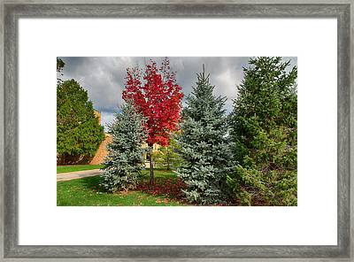 Deciduous And Evergreens Framed Print