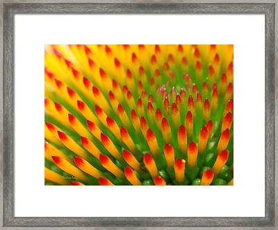 Deciphering Close Framed Print by Christina Rollo