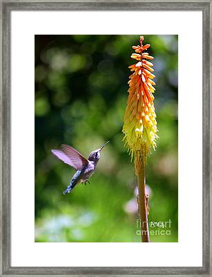 Decisions Decisions Framed Print by Patrick Witz