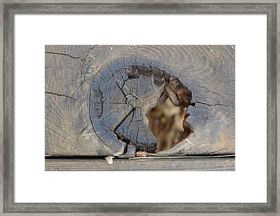 Deck Framed Print by Nora Boghossian