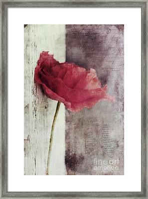 Decor Poppy Framed Print by Priska Wettstein