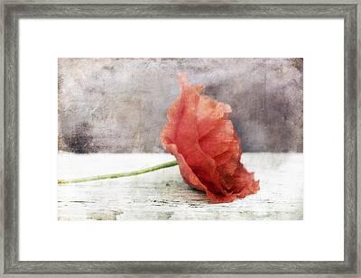 Decor Poppy Red Framed Print