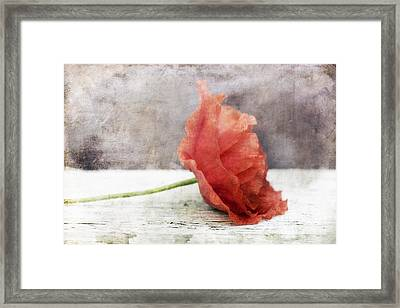 Decor Poppy Red Framed Print by Priska Wettstein