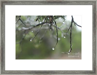 Decorated For Christmas Framed Print by Barbara Shallue