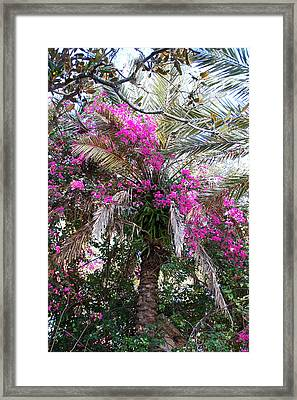 Decorated Palm Framed Print by Aimee L Maher Photography and Art Visit ALMGallerydotcom