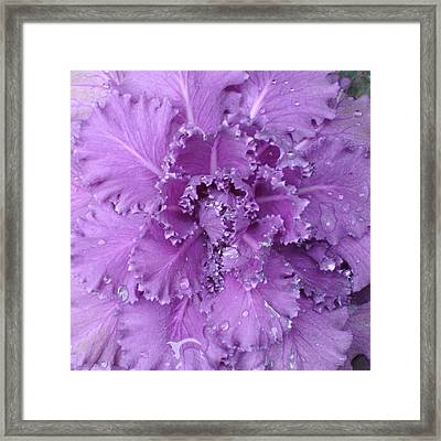 #decorative #cabbage #plant After A Framed Print by Stacey Lewis