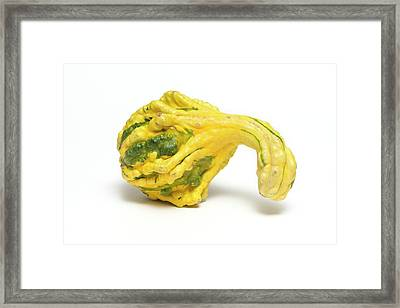 Decorative Gourd Framed Print