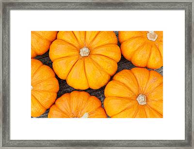 Decorative Pumpkins  Framed Print