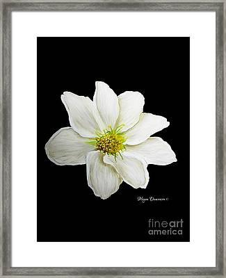 Decorative White Floral Flower Art Original Chic Painting Madart Studios Framed Print by Megan Duncanson