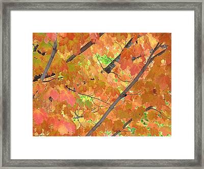 Deep Autumn Wcae  Framed Print by Lyle Crump