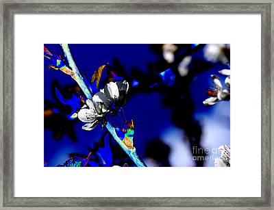 Deep Blue Framed Print by Carol Lynch