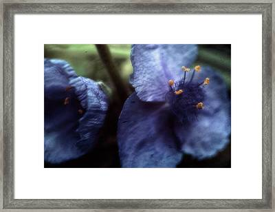 Framed Print featuring the photograph Deep Blue by Louise Kumpf