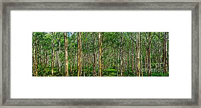 Deep Forest Framed Print by Az Jackson