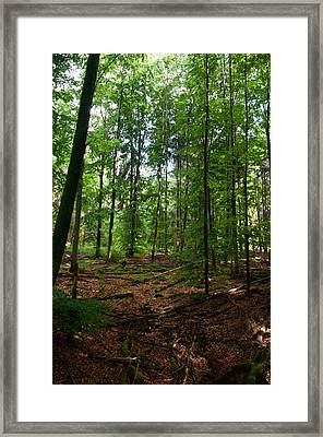 Deep Forest Trails Framed Print by Miguel Winterpacht