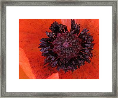 Framed Print featuring the photograph Deep In Bloom by Suzy Piatt