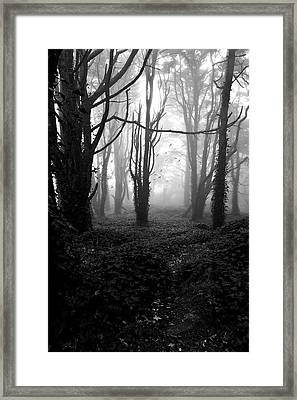 Deep In The Florest Framed Print by Jorge Maia