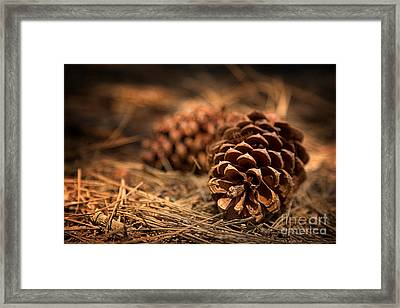 Deep In The Forest Framed Print by Jane Rix