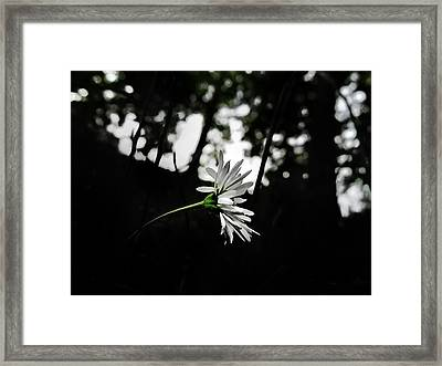 Deep In The Forest Framed Print by Marianna Mills