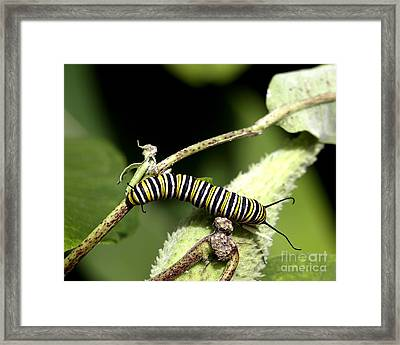 Deep In The Green - A Caterpillars Life Framed Print
