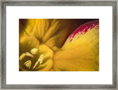 Deep In The Heart Of A Primrose Framed Print