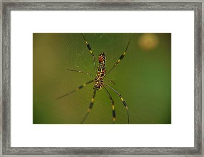 Deep In The Jungle Framed Print