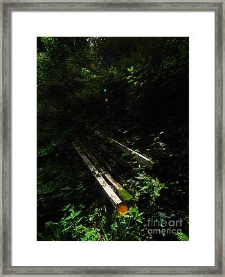 Framed Print featuring the photograph Deep In The Woods by Andy Prendy