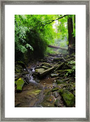 Deep In The Woods Framed Print by Bill Cannon
