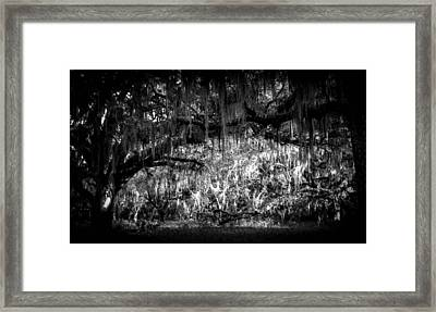 Deep In The Woods Framed Print by Christy Usilton