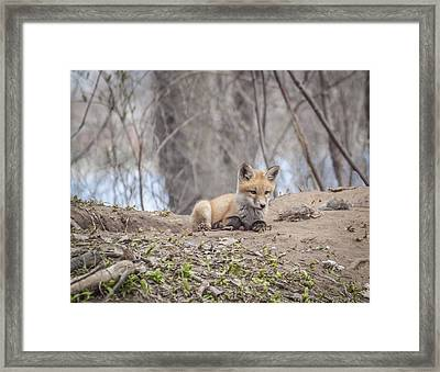 Deep In Thought 2 Framed Print by Thomas Young