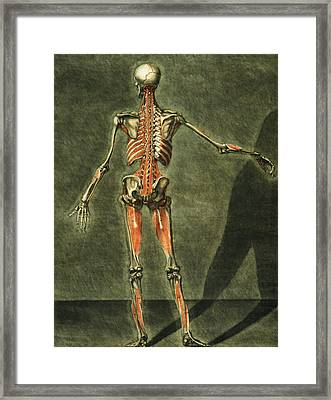 Deep Muscular System Of The Back Framed Print by Arnauld Eloi Gautier D'Agoty