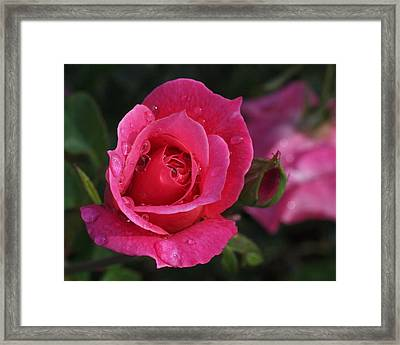Deep Pink Beauty Framed Print by Rona Black